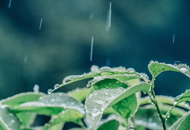 雨を受ける植物