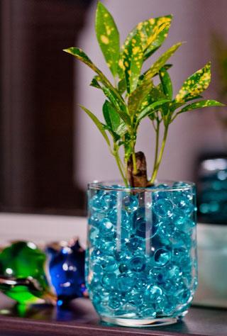 ジェリーボールに植わった鑑賞植物